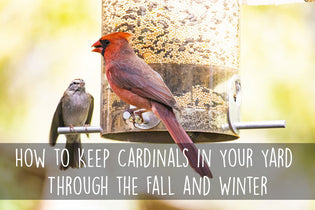 how-to-keep-cardinals-in-your-yard-through-the-winter