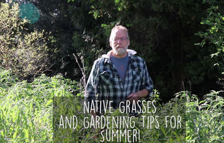 Why Native Grasses and Gardens Matter