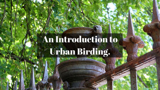 An Introduction to Urban Birding