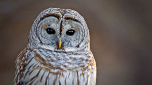 How to Install a Barred Owl Nesting Box