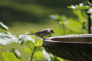 Summer Bird Baths and Why Your Yard Needs One