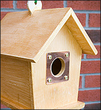 bird-house-hole-protector