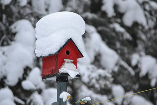 bird-house-in-the-snow