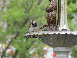 Keep Your Bird Bath Clean This Fall with These Helpful Tips