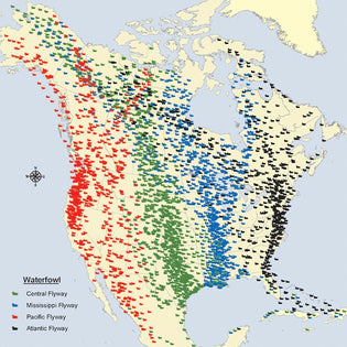 north-americas-migration-flyways