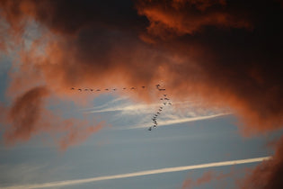 bird-migration-in-the-sky