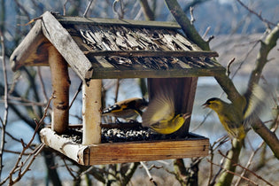 birds-at-platform-feeder