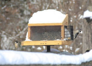 birds-at-platform-feeder-in-winter
