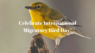 Celebrate International Migratory Bird Day