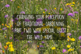 changing-traditional-gardening-with-the-wild-yam