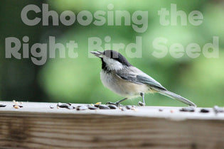 How to Choose the Right Bird Seed