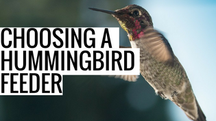 choosing-a-hummingbird-feeder