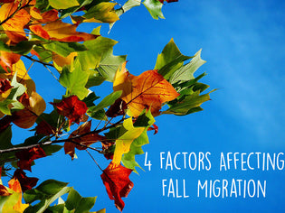 factors-affecting-fall-migration
