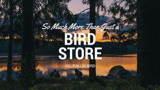 a-bird-watching-store-and-more-ottawa