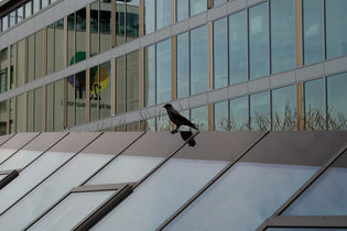 bird-near-glassed-downtown-buildings