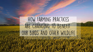 How Farming Practices are Changing to Benefit Our Birds and Other Wildlife