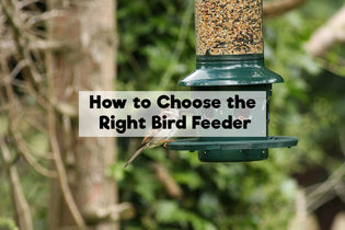 How to Choose the Right Bird Feeder