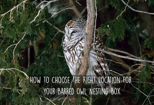 how-to-choose-the-right-location-for-barred-owl-box