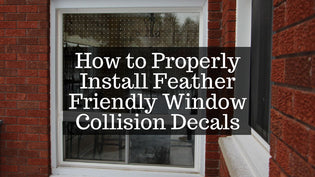 window-collision-decal-installation
