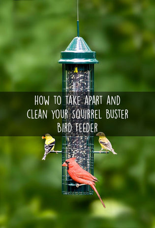 how-to-take-apart-and-clean-your-squirrel-buster