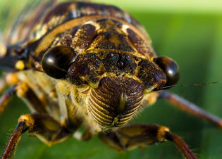 insect-up-close