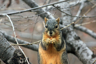 keep-squirrels-out-of-bird-feeders