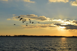 migrating-birds-over-a-lake