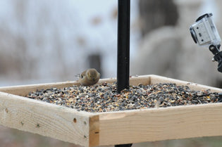 Attract A Wide Variety Of Birds With a Platform Bird Feeder
