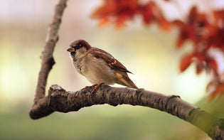 sparrow-on-tree-limb