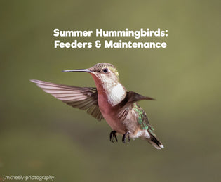 Summer Hummingbirds: Feeders & Maintenance
