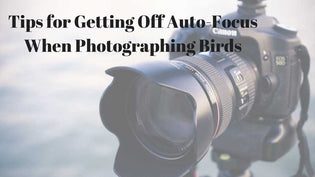 Birding Photography – 3 Tips for Getting off the Auto-Focus Mode on Your Camera