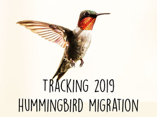 tracking-2019-hummingbird-migration