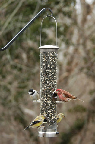 tube-feeder-with-finches