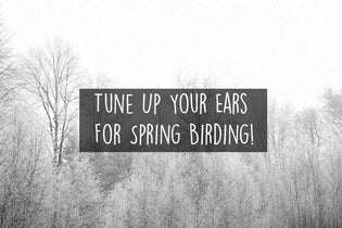 tune-up-your-ears-for-spring-birding