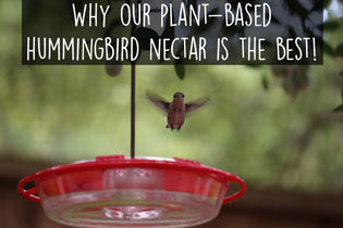 Why Our Plant-Based Hummingbird Nectar is the Best!