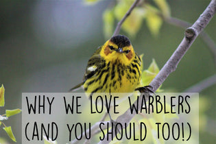 why-love-warblers