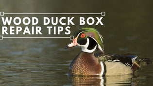 wood-duck-box-repair-tips