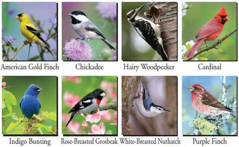 Birds that are attracted to the Squirrel Buster Standard Wild Bird Feeder,