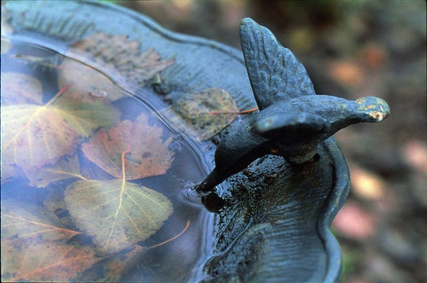 bird-bath-in-fall