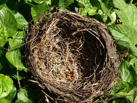 bird-nest-on-the-ground