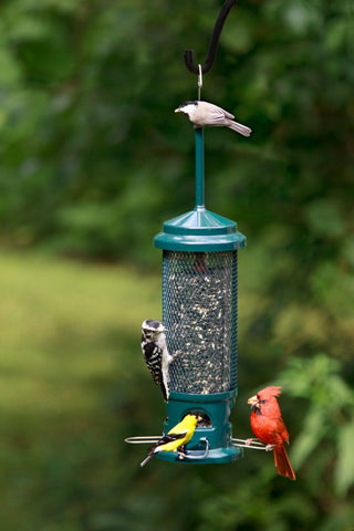 birds-on-squirrel-buster