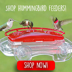 shop-hummingbird-feeders