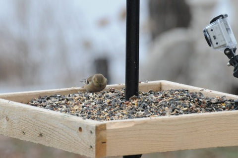 open-tray-bird-feeder