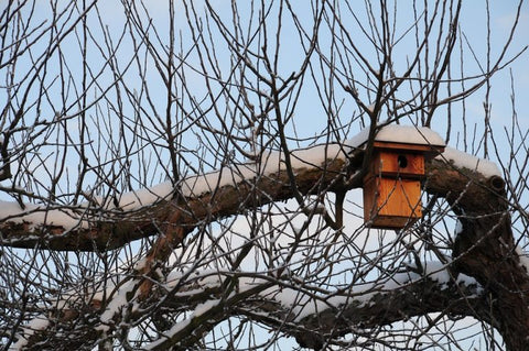 roosting-box-in-winter