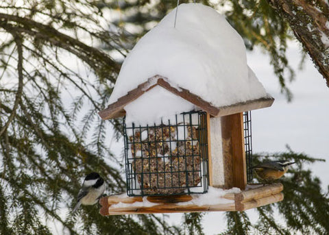 suet-feeder-in-winter