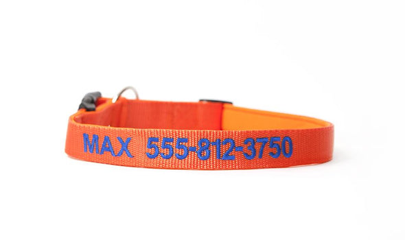 Personalized Dog Collars - Extra Small / Orange - Qualtry