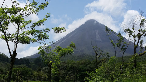 Central America Volcano Coffee Landscape