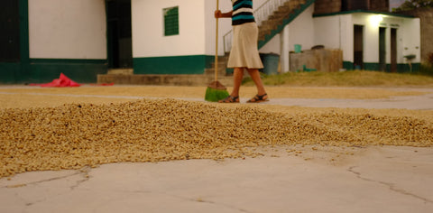 Pulped Natural Process Coffee