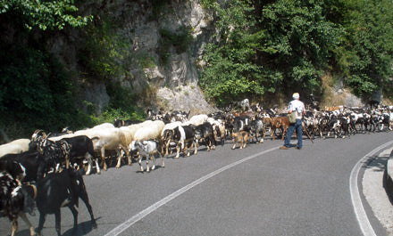 goats_crossing