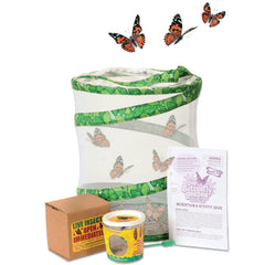 fun indoor butterfly farm activity